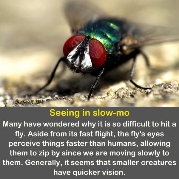 A close up of the eyes of a fly.