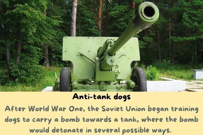 A green tank.