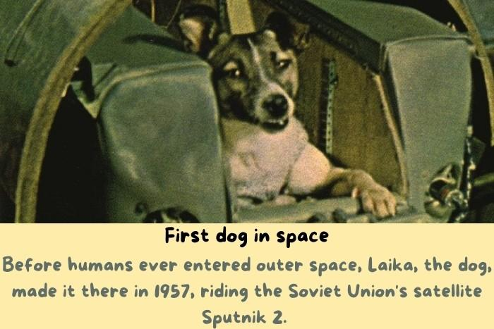 The first dog in space.