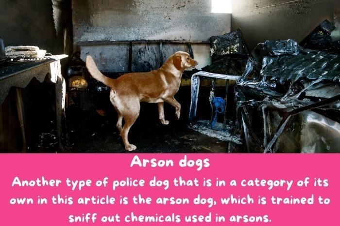 Arson dogs