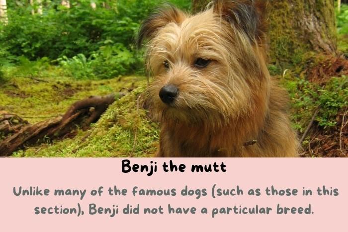Benji the mutt.