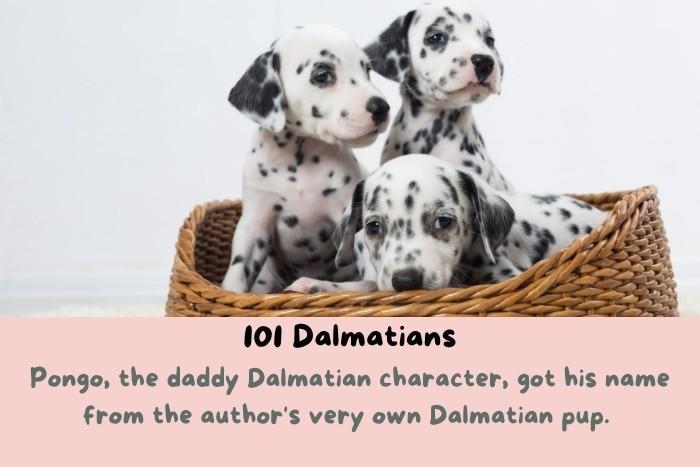 3 cute Dalmatians pups.