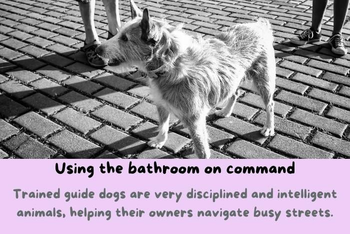 Using the bathroom on command