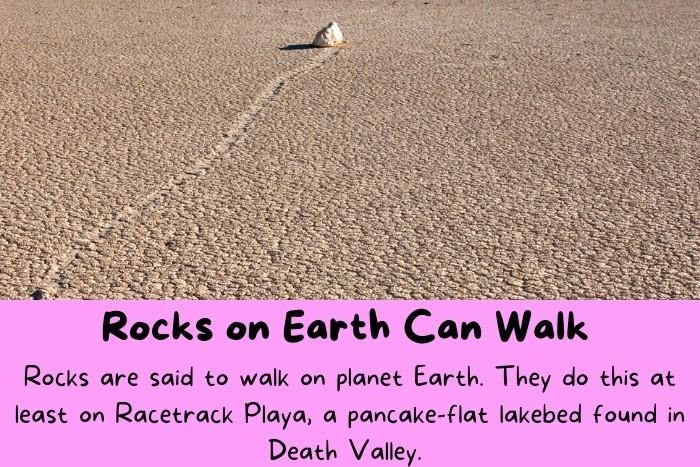 A Rock that look like it walking on Earth