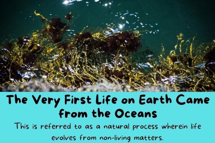 Sea plants on the ocean surface.