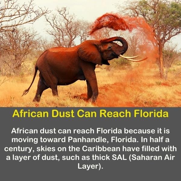 Geography fun fact 18 text - African Dust Can Reach Florida - African elephants create a lot of dust