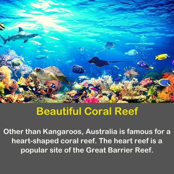 Geography fun fact number 20 text - Beautiful Coral Reef