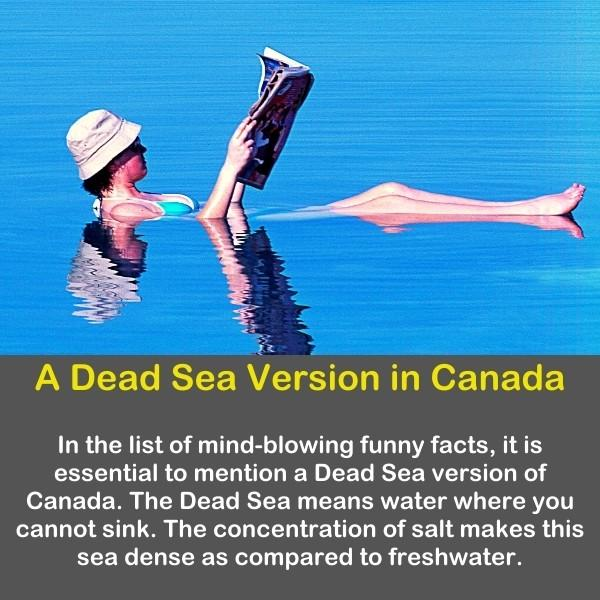 A woman floating and reading a book on the dead sea.
