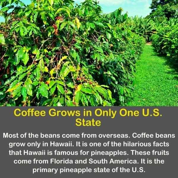 Coffee beans with trees.