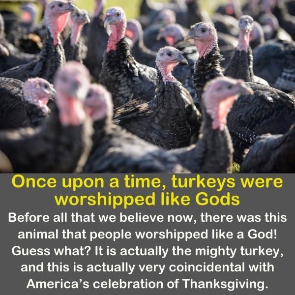 Turkeys were worshipped like Gods