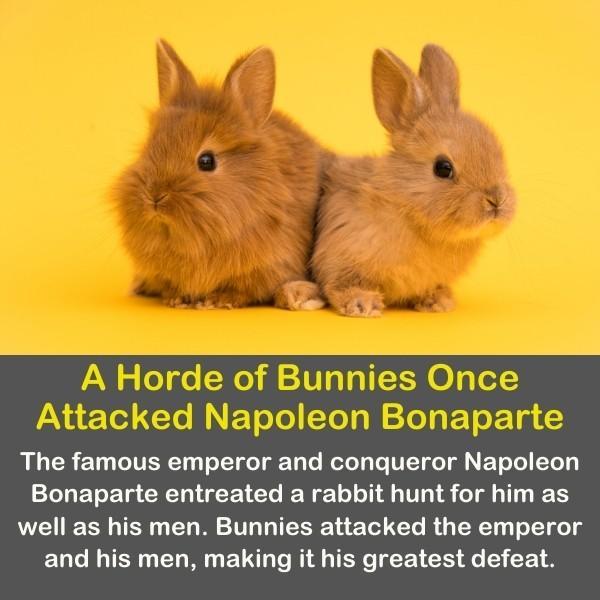 A Horde of Bunnies.
