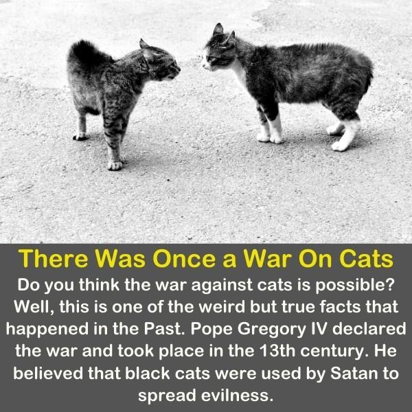 Grey Cats & kittens