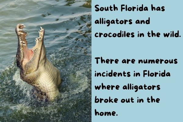 South Florida has alligators and crocodiles in the wild.