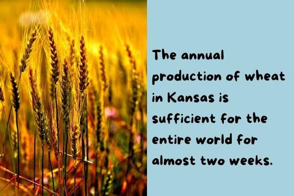 Wheat from Kansas.