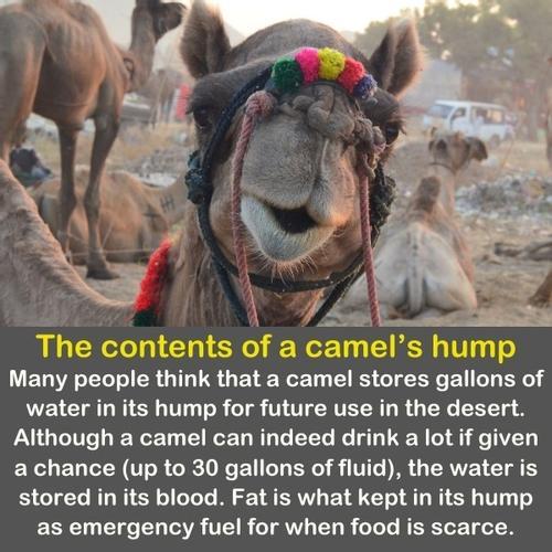 A weird funny close up of a camel's face.