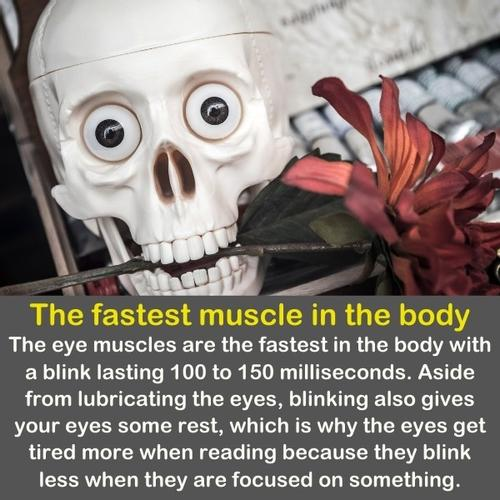 A funny skeleton face, with big eyes and a flower in his mouth.