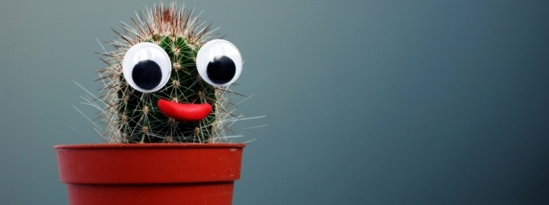 Funny weird cactus plant with eyes, smiling.