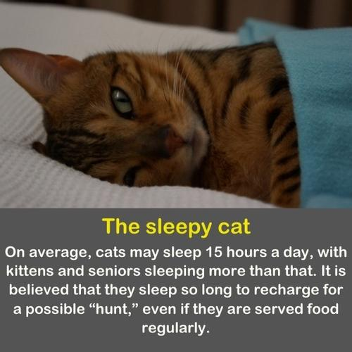 A cat sleeps on a bad with a blankets.