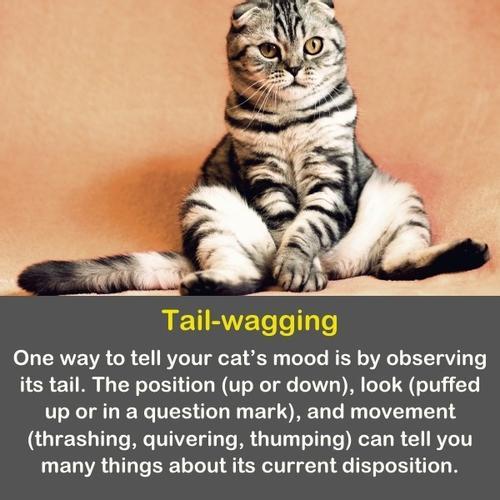 A funny cat sitting like a human.