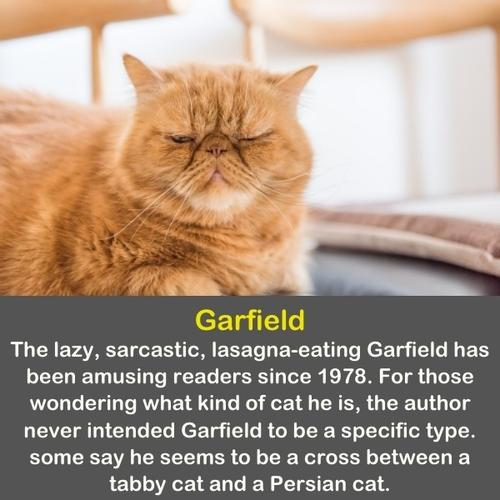 A real ginger cat looking like Garfield.