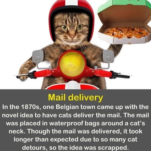 A funny cat image as a pizza delivery cat on a motorcycle.