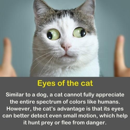 a cat with a funny look and funny eyes.