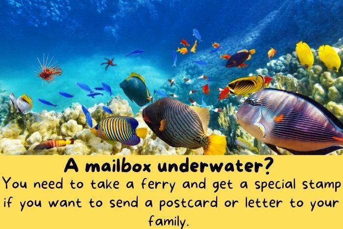 Underwater reef in Australia.