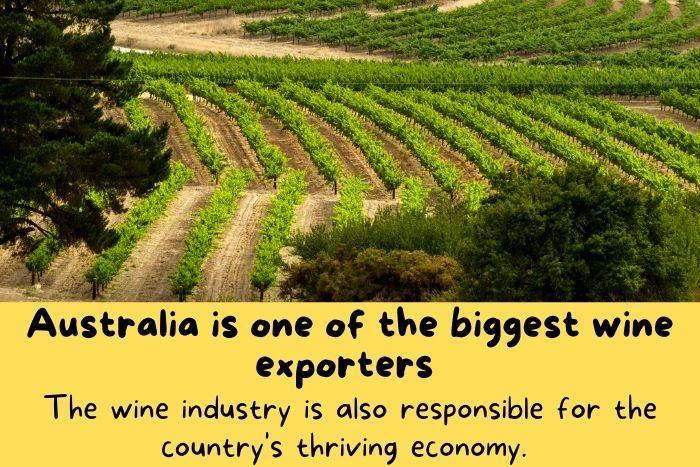 Wine vineyard in Australia.