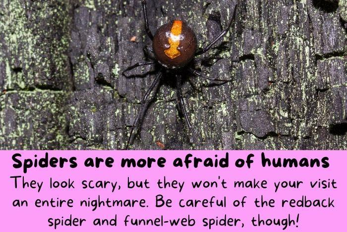 Spiders in Australia.