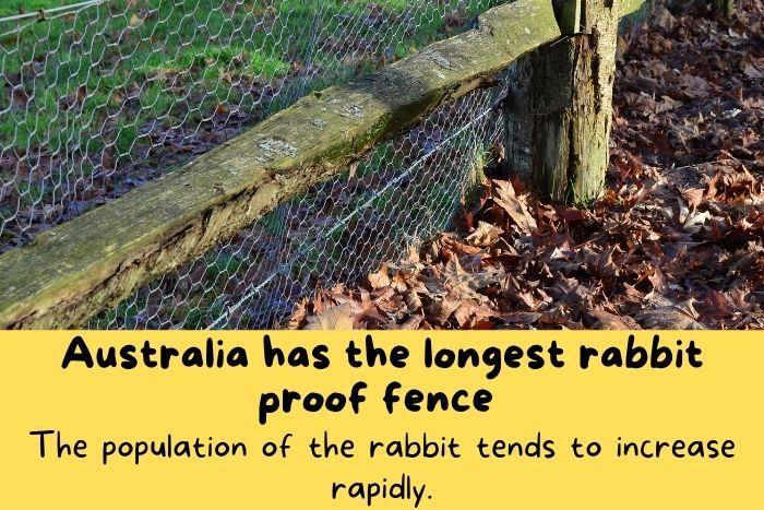 the longest rabbit proof fence