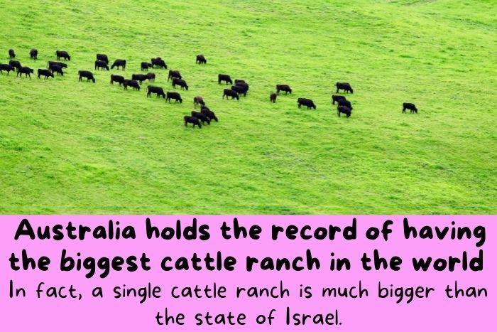 the biggest cattle ranch in the world