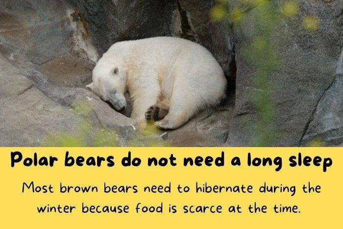 Sleeping Polar bear.
