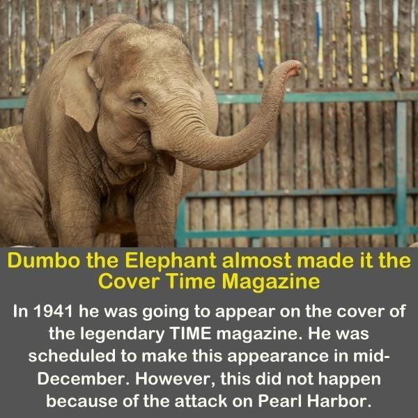 An elephant illustrating Disney's Dumbo.