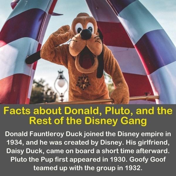 Pluto the dog in Disneyland.