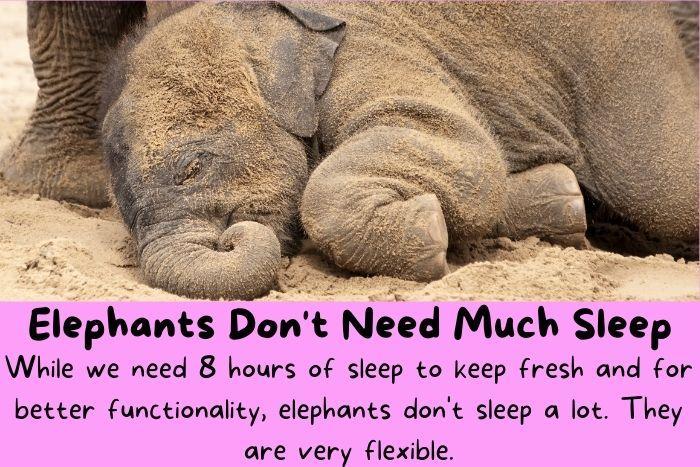 Elephants Don't Need Much Sleep