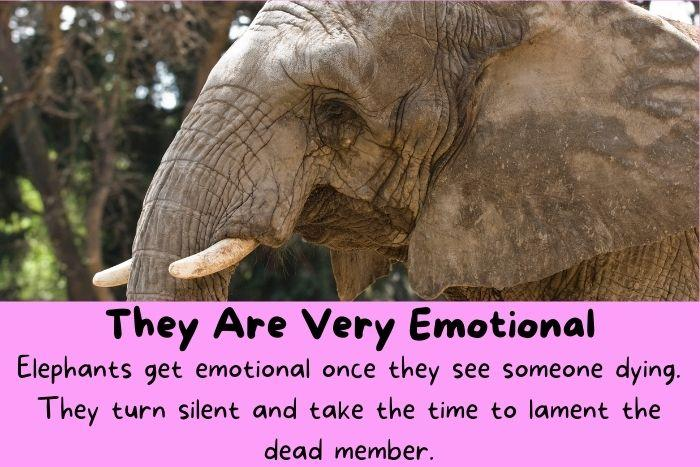 They Are Very Emotional