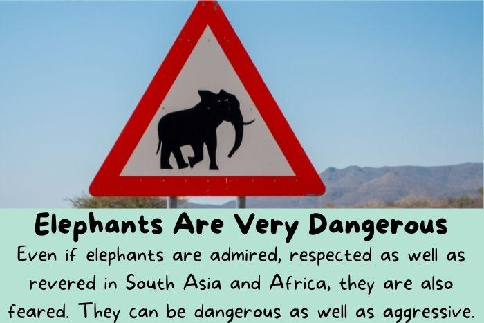A sign says that elephants are very dangerous