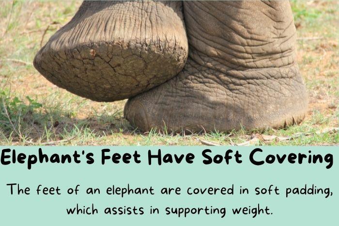 Elephant's Feet