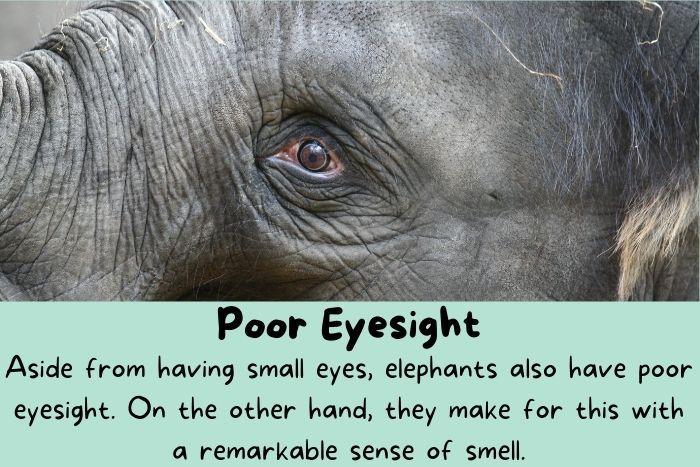 Elephants eyes