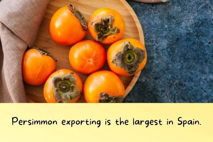 Spanish Persimmon.
