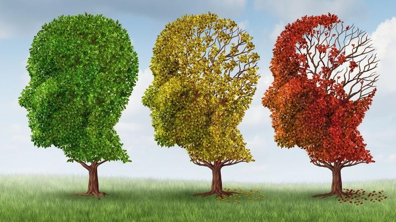 Three trees in a shape of a human head with a brain, when the green tree on the right is the one after brain training