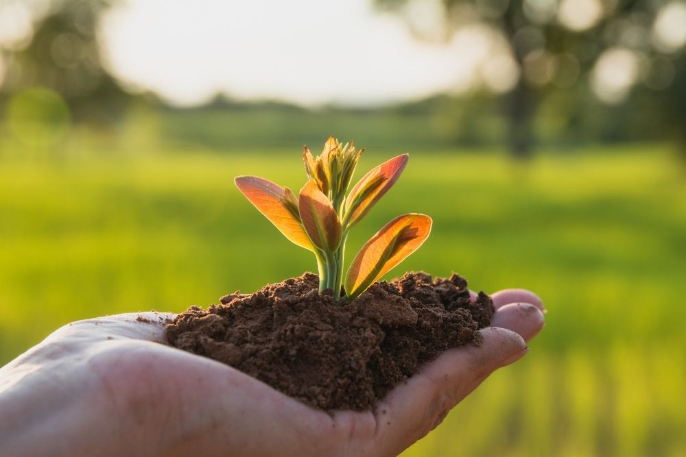 A hand is holding a planet and soil.