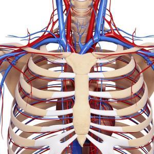 Fun Facts Human Body Systems Trivia Quiz
