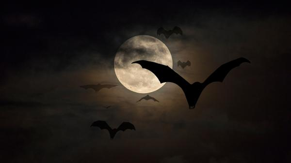 Bats and vampires on the night with a white moon in the sky.