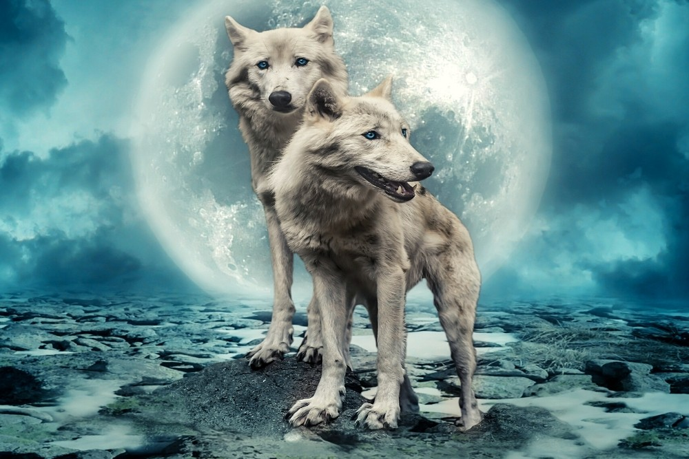 Two white wolves with the moon in the sky.