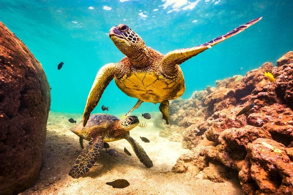 Sea animals - fish and turtles.