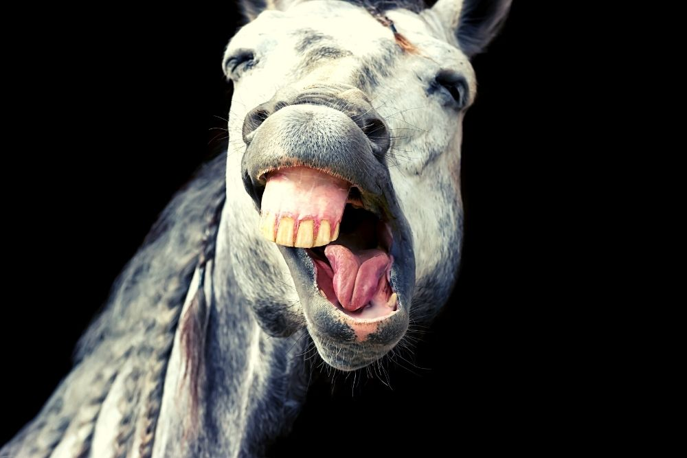 A funny face of a horse.