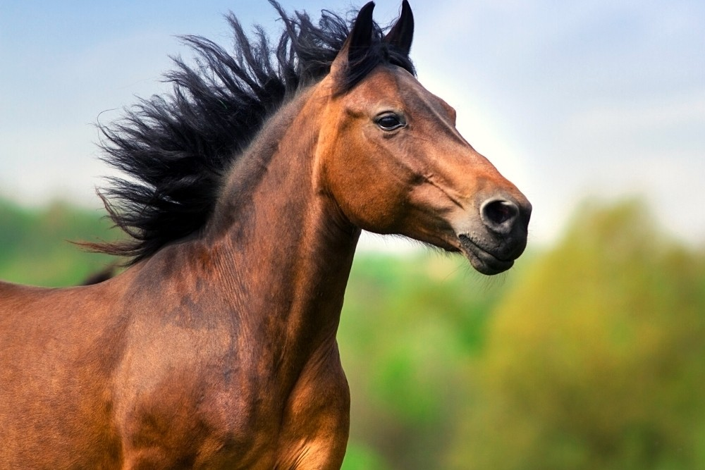 A beautiful brown horse