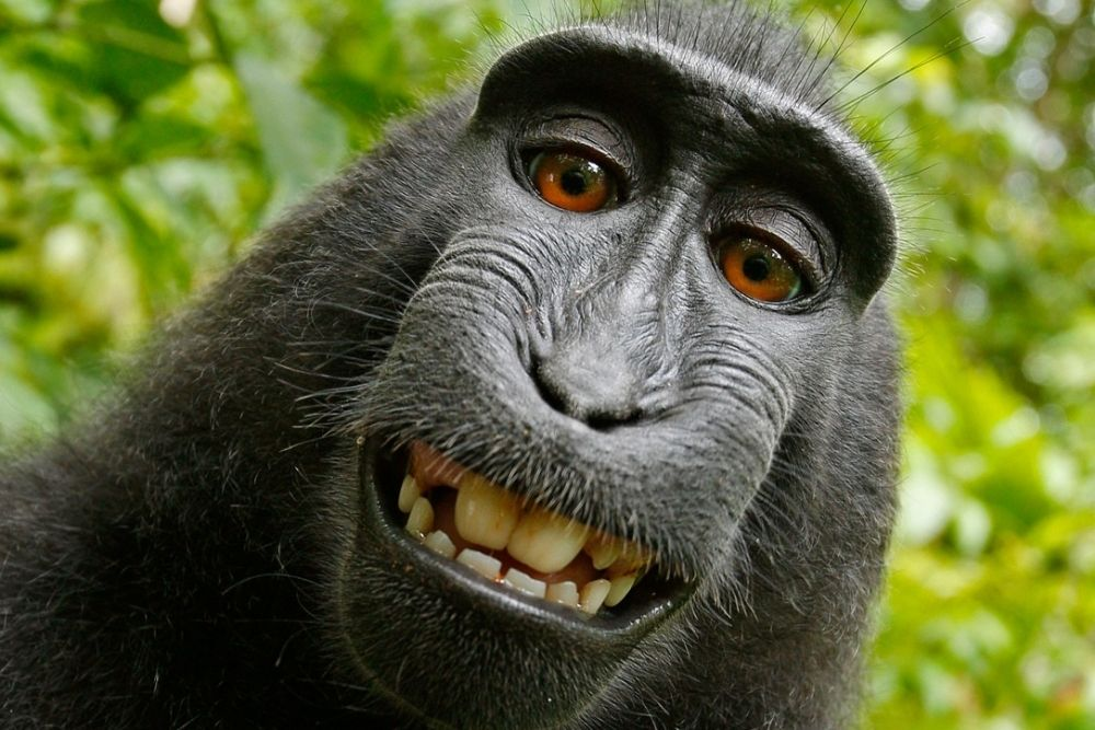 A funny Monkey is smiling in nature.