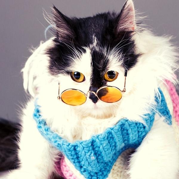 A cute black and white cat with glasses.